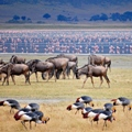 The Ultimate Safari in Tanzania!