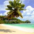 The Amazing Seychelles